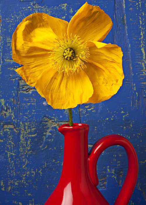 Yellow Greeting Card featuring the photograph Yellow Iceland Poppy Red Pitcher by Garry Gay