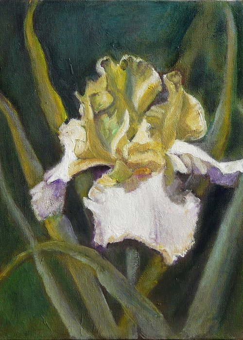 Flower Greeting Card featuring the painting Yellow Iris by Gloria Smith