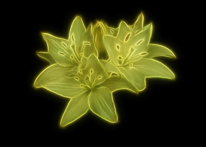 Lilies Greeting Card featuring the photograph Yellow Lilies On Black by Sandy Keeton