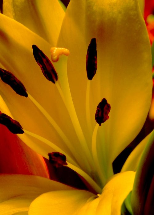 Lilly Greeting Card featuring the photograph Yellow Lilly by Doc Howell