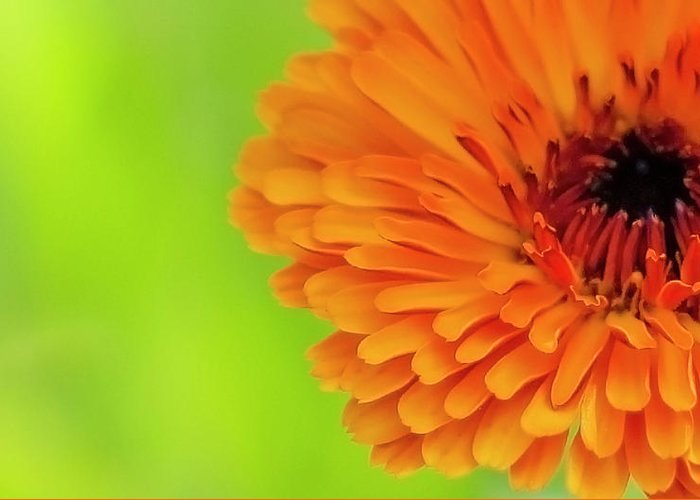 Flower Greeting Card featuring the photograph Yellow On Green by Yarinka Morozova