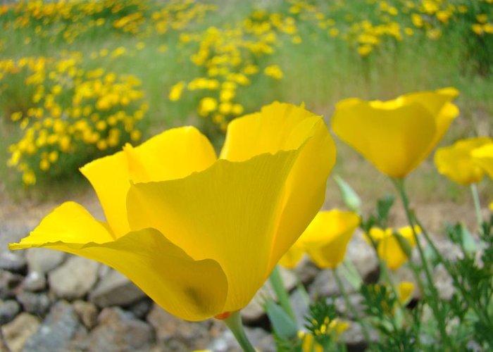 Yellow poppy flower meadow landscape art prints baslee troutman poppy greeting card featuring the photograph yellow poppy flower meadow landscape art prints baslee troutman by mightylinksfo