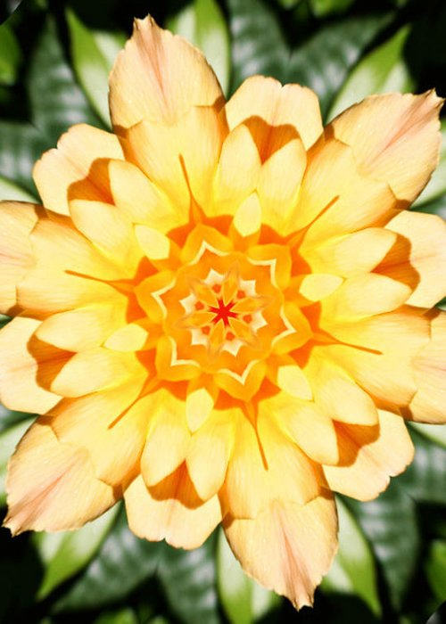 Flowers Greeting Card featuring the photograph Yellow Rose Kaleidoscope by Cathie Tyler