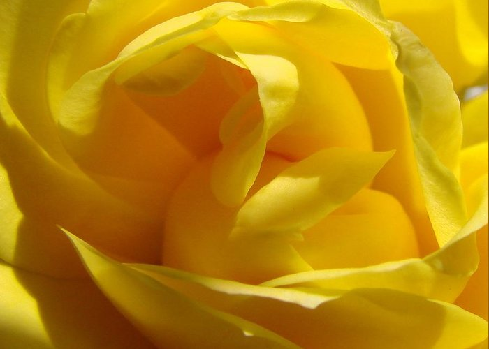 Roses Greeting Card featuring the photograph Yellow Rose by Liz Vernand