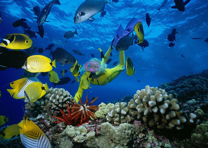 Blue Greeting Card featuring the photograph Yellow Scuba Diver by Ed Robinson - Printscapes