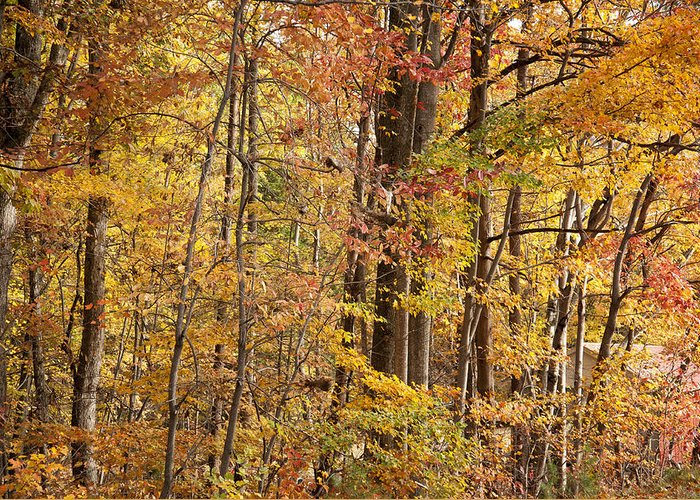 Autumn Greeting Card featuring the photograph Yellow Study by Dennis Ludlow