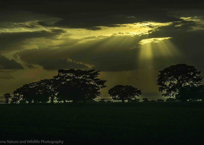 Landscape- Sun Midway To Setting Under A Heavy Cloud And Behind Big Ficus Trees. Greeting Card featuring the photograph Yellow Sun by Thomas Lemma Argaw