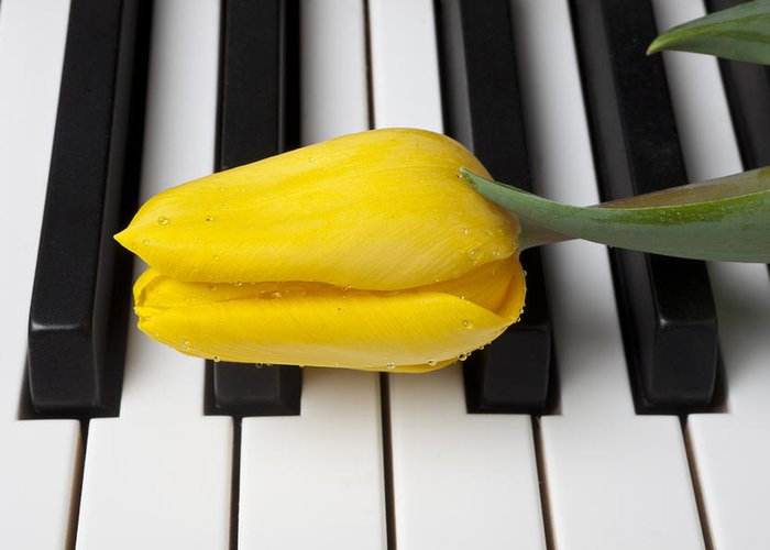 Tulip Greeting Card featuring the photograph Yellow Tulip On Piano Keys by Garry Gay