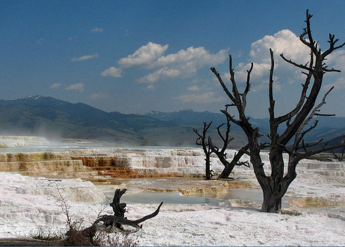 Yellowstone Greeting Card featuring the photograph Yellowstone by Jana Goode