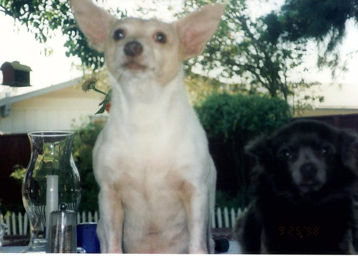 Dogs Greeting Card featuring the photograph Ying And Yang by Maggie Cruser