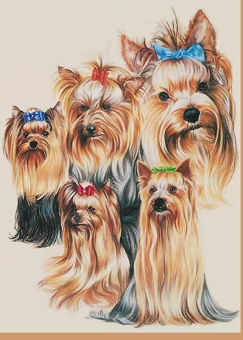 Purebred Greeting Card featuring the drawing Yorkshire Terrier by Barbara Keith