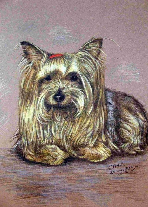 Dog Greeting Card featuring the drawing Yorkshire Terrier by Nicole Zeug