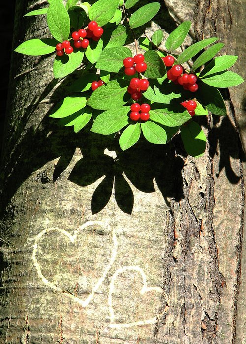 Tree Greeting Card featuring the photograph You And Me by Deborah Johnson