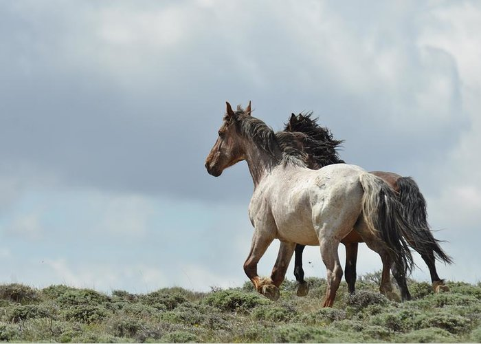 Wild Horses Greeting Card featuring the photograph You Will Never Catch Us by Frank Madia