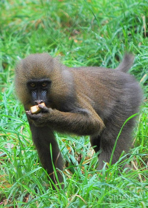 Greeting Card featuring the photograph Young Baboon by Carol Christopher
