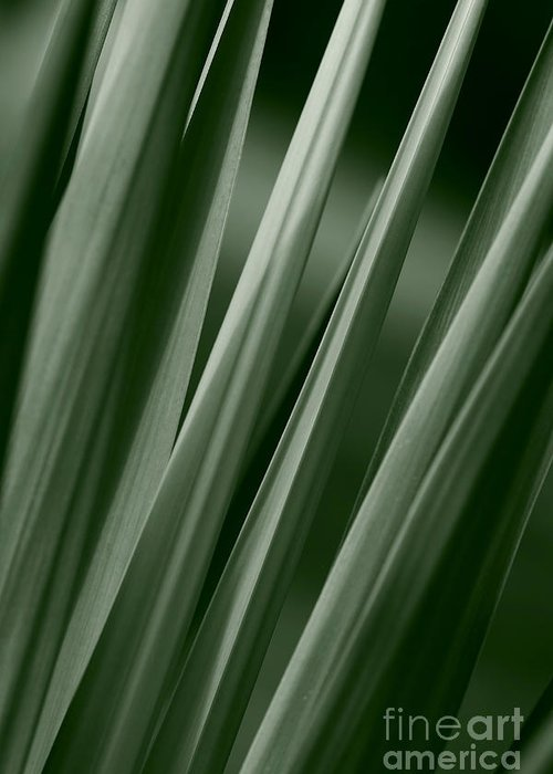 Abstract Greeting Card featuring the photograph Yucca Spikes by Jeannie Burleson