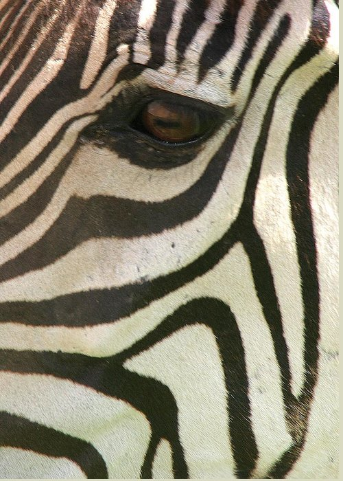 Zebra Greeting Card featuring the photograph Z-eye by Donald Tusa