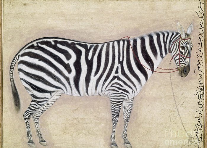 1620 Greeting Card featuring the photograph Zebra, C1620 by Granger