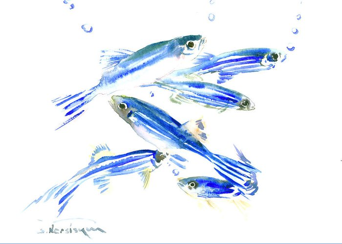 Aquarium Fish Drawings Greeting Cards
