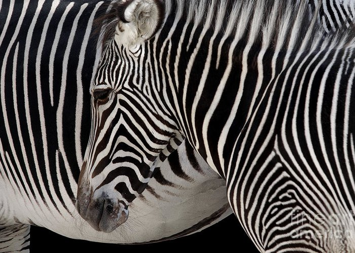 Abstract Greeting Card featuring the photograph Zebra Head by Carlos Caetano