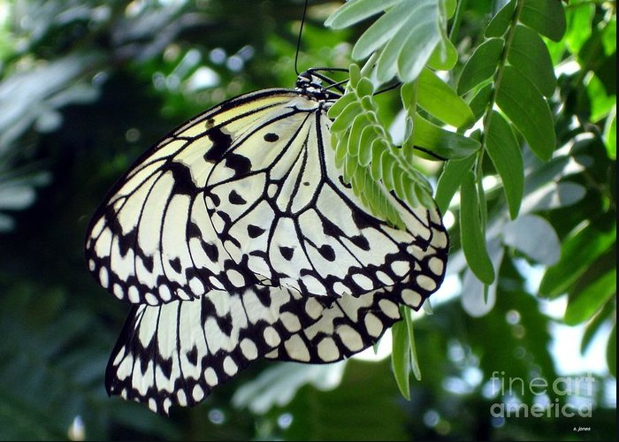 Butterfly Greeting Card featuring the photograph Zebra In Disguise by Shelley Jones