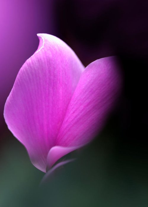 Flower Greeting Card featuring the photograph zen by Katherine Morgan