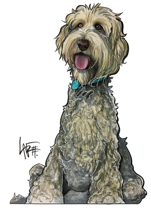 Labradoodle Drawings Greeting Cards