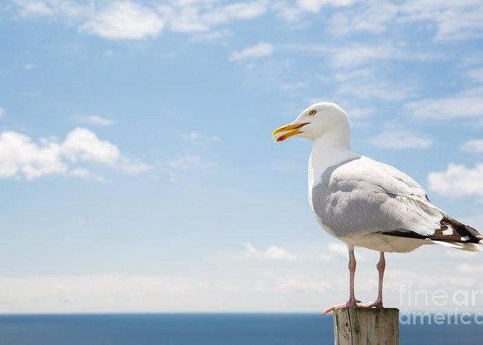 Seabirds Greeting Cards