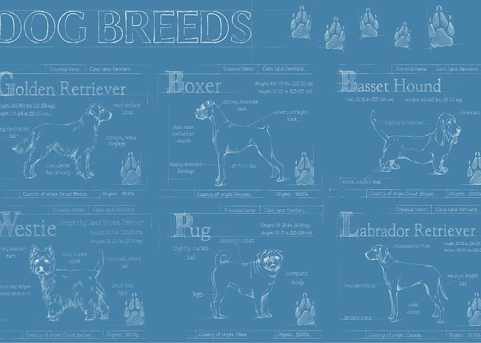 Pets Greeting Card featuring the painting Dog Breeds Infograph by Ethan Harper