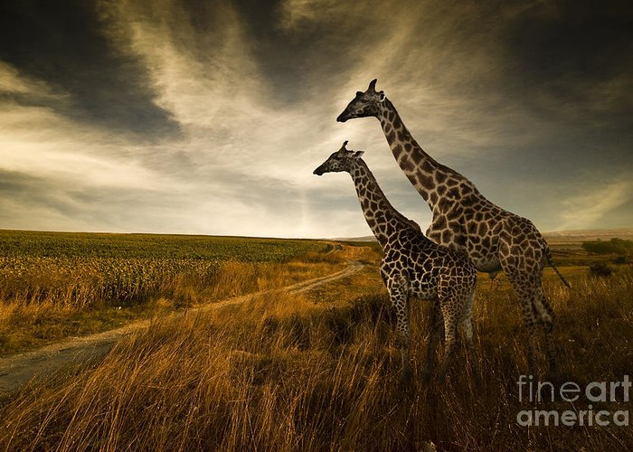 Designs Similar to Giraffes And The Landscape