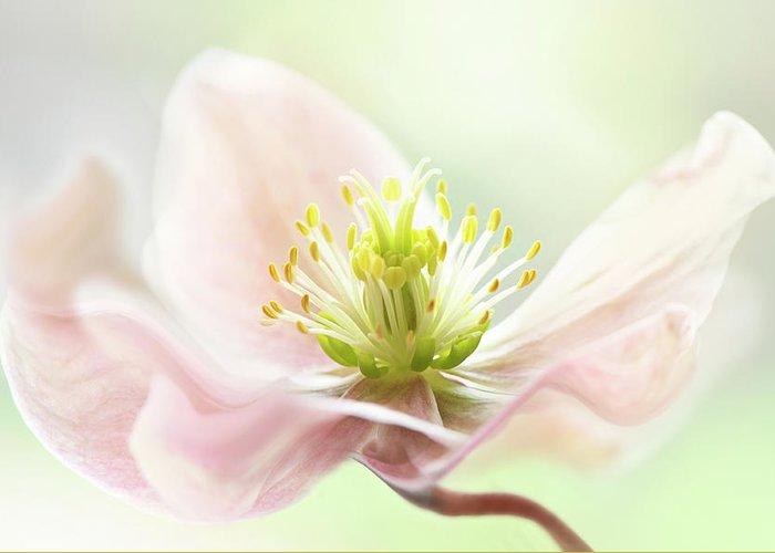 Designs Similar to Lenten Spring by Jacky Parker