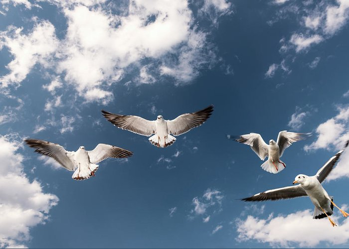 Animal Themes Greeting Card featuring the photograph Myanmar, Inle Lake, Seagulls Inflight by Martin Puddy