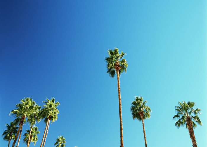 Clear Sky Greeting Card featuring the photograph Palm Trees Against Blue Sky by Micha Pawlitzki