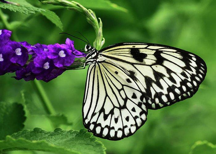 Adam Jones Greeting Card featuring the photograph Paper Kite Butterfly by Adam Jones