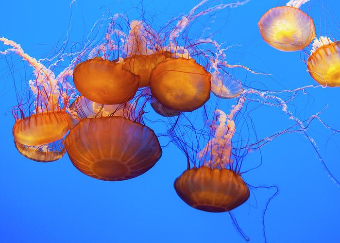 Monterey Bay Aquarium Stationery