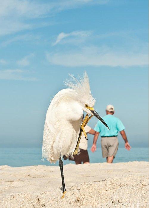Avian Greeting Cards