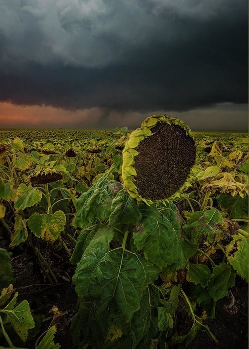 Tornado Greeting Card featuring the photograph Twisted 1 by Aaron J Groen