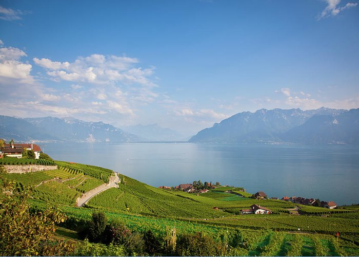 Alcohol Greeting Card featuring the photograph Vineyards Around Lake Leman by Onfokus