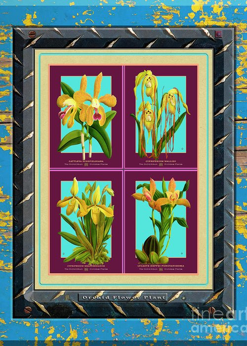 Vintage Greeting Card featuring the drawing Antique Orchids Quatro On Rusted Metal And Weathered Wood Plank by Baptiste Posters