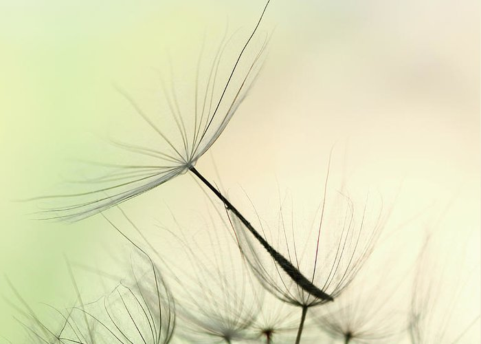 Single Flower Greeting Card featuring the photograph Dandelion Seed by Jasmina007