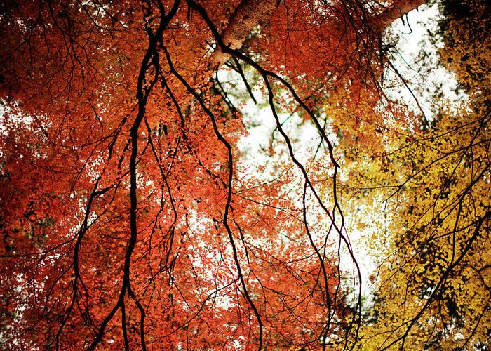 Tranquility Greeting Card featuring the photograph Fall Colors In Japan by Jdphotography