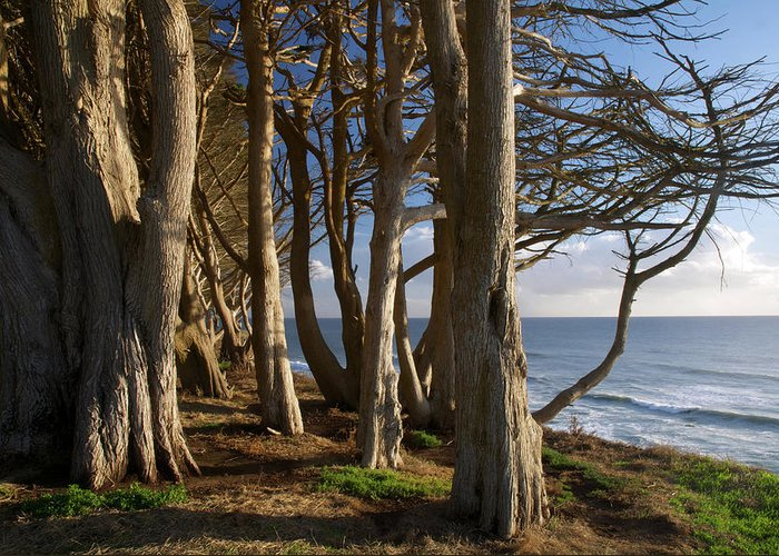 Tranquility Greeting Card featuring the photograph Rustic Davenport Coast by Mitch Diamond