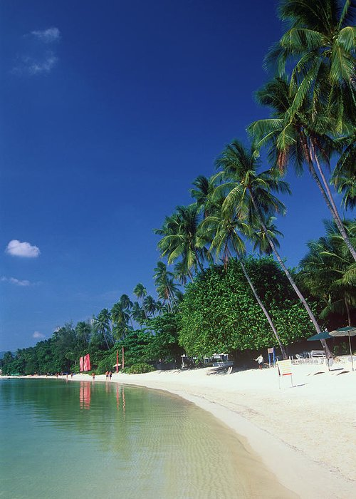 Water's Edge Greeting Card featuring the photograph Palm Trees At Sandy Chaweng Beach by Otto Stadler