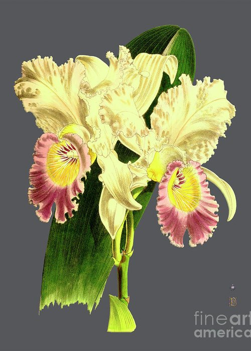 Vintage Greeting Card featuring the digital art Orchid Old Print by Baptiste Posters