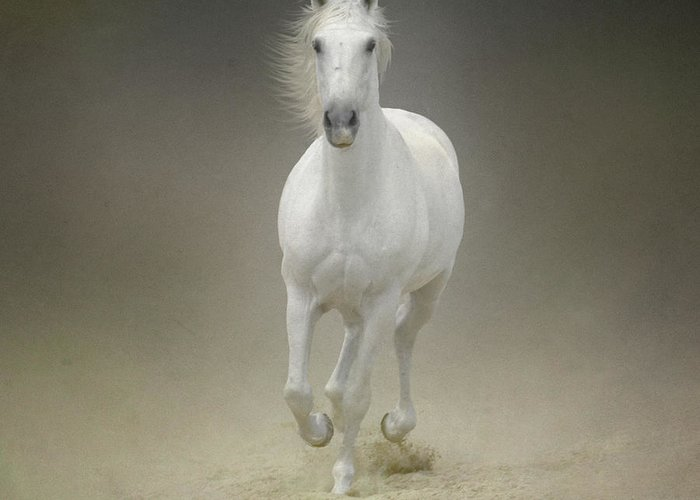 Horse Greeting Card featuring the photograph White Horse Galloping by Christiana Stawski