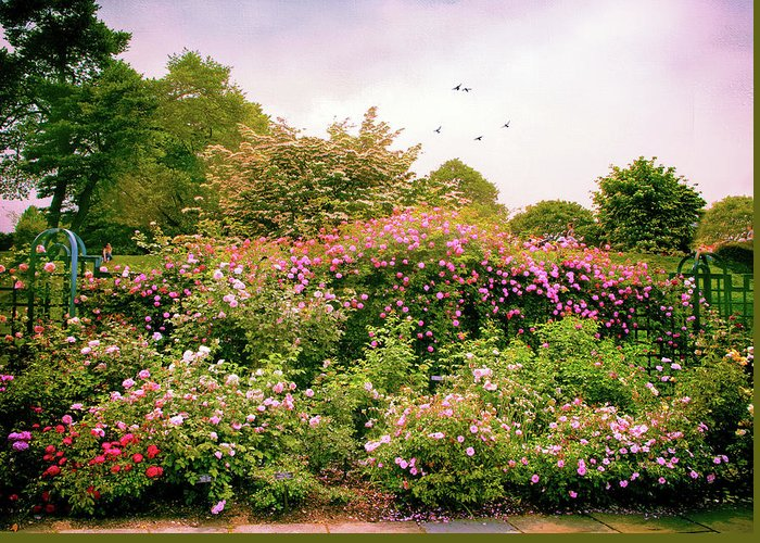 New York Botanical Garden Greeting Card featuring the photograph Rose Garden Greeting by Jessica Jenney