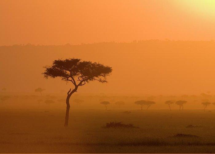 Tranquility Greeting Card featuring the photograph Acacia Tree At Sunset, Masai Mara by James Hager / Robertharding