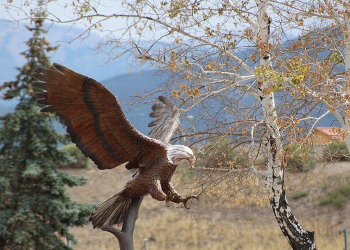 Eagle Greeting Card featuring the photograph American Eagle in Autumn by Colleen Cornelius