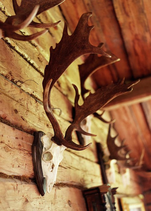 Horned Greeting Card featuring the photograph Antler Collection On Wall by Granefelt, Lena