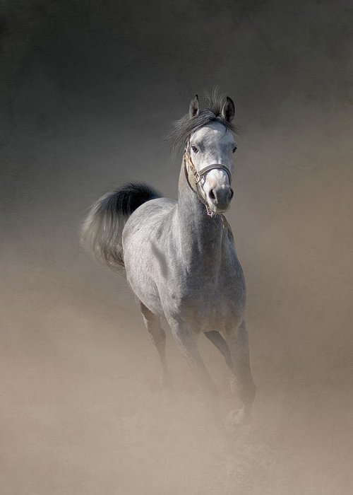 Horse Greeting Card featuring the photograph Arabian Horse Running Through Dust by Christiana Stawski